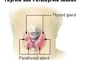 Natural Thyroid Doctor