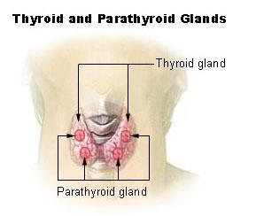 Arizona Natural Thyroid Doctor