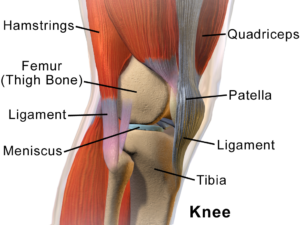 Arizona Patellar Tendonitis Rehab