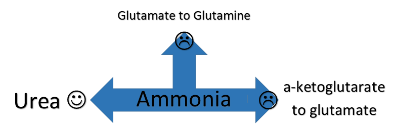 GABA and autism from glutamine